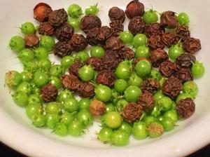 Green Coriander and Black Peppercorn